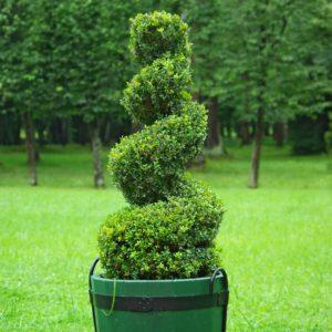 Bonsaie i inne formy strzyżone