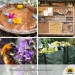 Jak możemy sprzyjać pszczołom