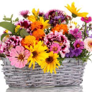 Kompozycje z kwiatów doniczkowych