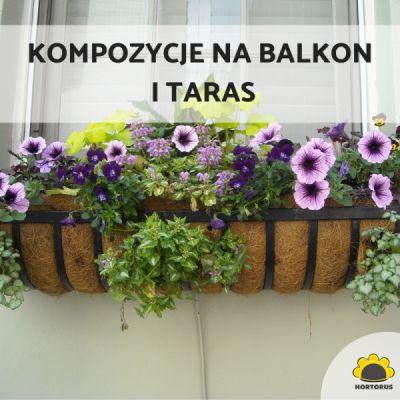 Kompozycje na balkon i taras