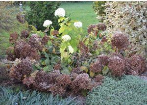 porady ogrodnicze na październik
