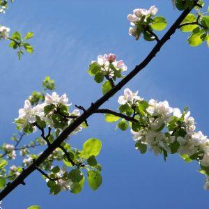 porady ogrodnicze na kwiecień