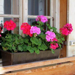 kwiaty balkonowe