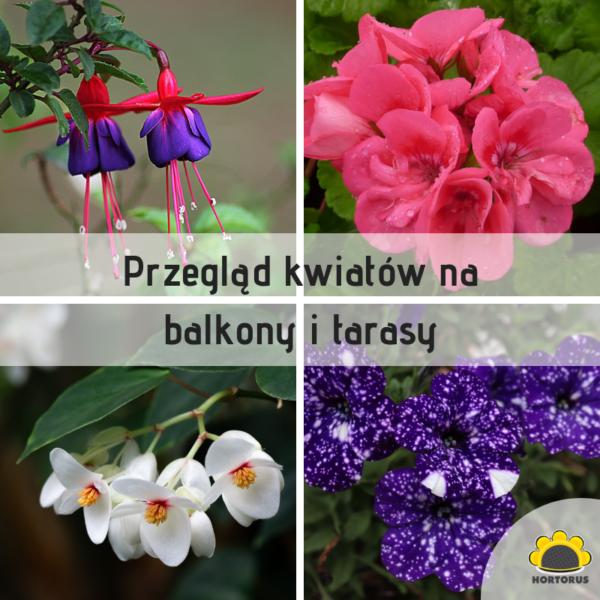Przegląd Kwiatów Na Balkony I Tarasy Hortorus
