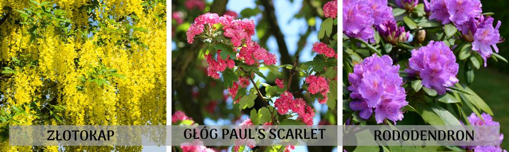 ogród stale kwitnący na wiosnę